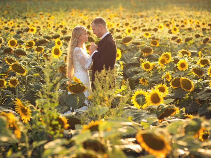 Natalia & Adam   Plener ślubny w słonecznikach