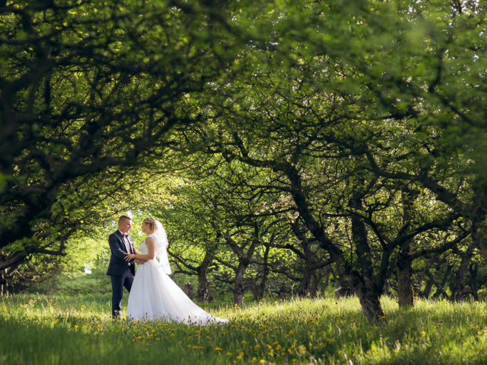 Plener ślubny w sadzie jabłoni
